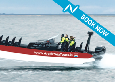 Arctic Sea Tours Rhib Whale Watching