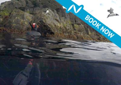 Arctic Snorkeling in Grimsey Iceland