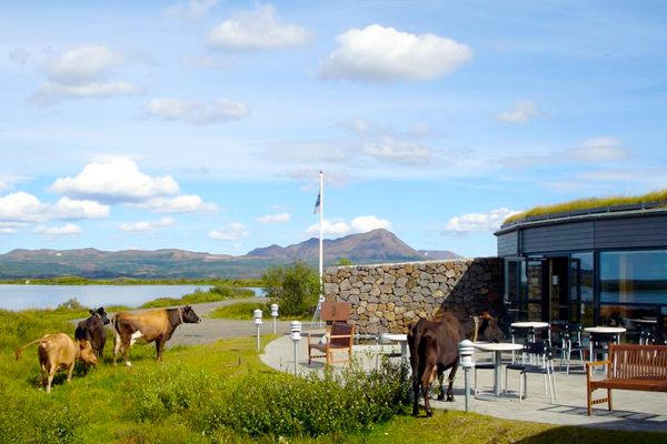 Sigurgeir's Bird museum
