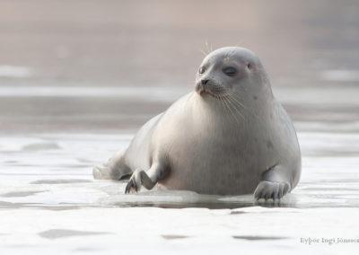 Seal Center