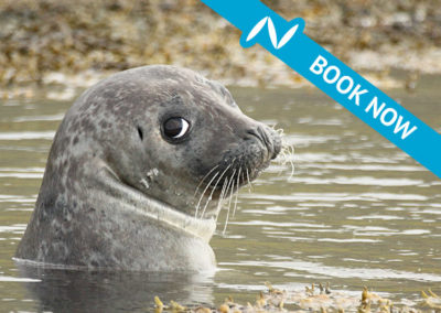 Seal watching in the north west