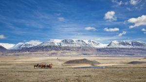 Horses seen via Self-drive in Iceland