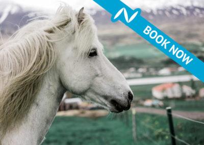 Brúnir Icelandic horse show